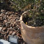 realizzazione impianti di irrigazione a scomparsa, a goccia, per vasi, realizzazione impianti di illuminazione a led.